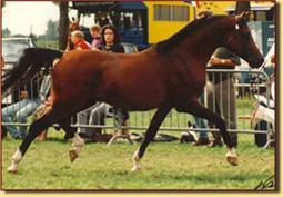 Anthal kampioen RK Tilburg 1993