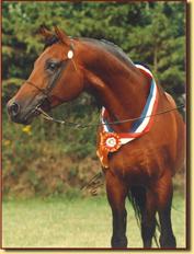 Anthal kampioen RK Tilburg 1993 - 9 jaar