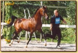 Anthal NK 2002 - 18 jaar